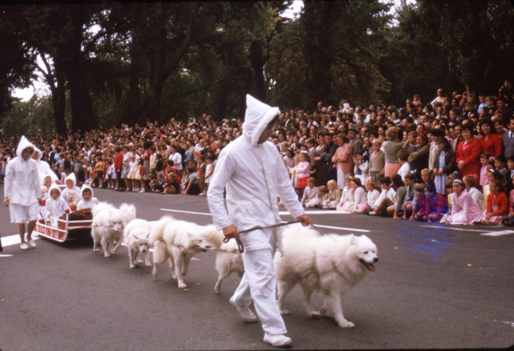 Huskies, Moomba Parade, 1964